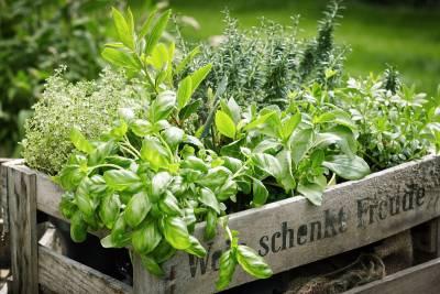 Plantes aromatiques en vrac