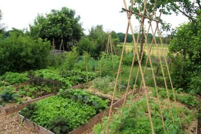 Les bases de la permaculture dans le potager